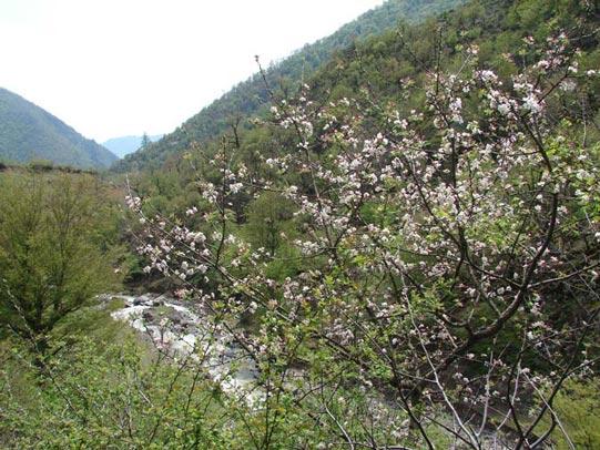 طبیعت بهاری سینه هونی