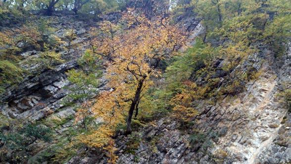 پاییز زرد و نارنجی و سرخ