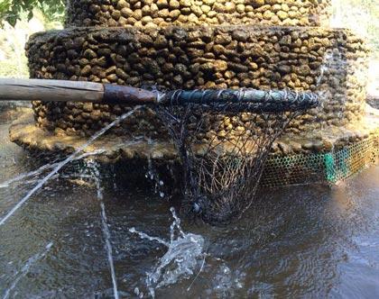 ماهی قزل آلا 2
